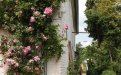 Teak Gartenstuhl Beaufort - Bild 5